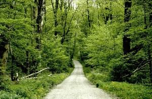 almskogforr